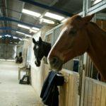 box-interieur-deux-chevaux-qui-passent-leur-tetes-en-fond-on-voit-ecuries-structure-nercillac-charente.