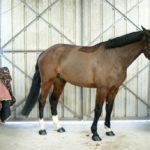 cheval-a-vendre-nercillac-cheval-marron-fonce-criniere-noire-ecuries-nicolas-mergnac-charente.