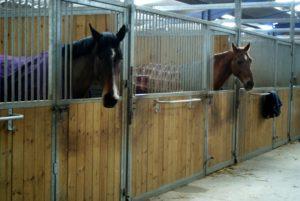 deux-chevaux-dans-leur-box-avec-des-couvertures-sur-eux-ecuries-nicolas-mergnac-charente.