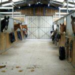 ecuries-box-interieur-avec-tous-les-chevaux-qui-sortent-la-tete-ecuries-nicolas-mergnac-nercillac-charente