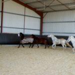 quatres-chevaux-dans-le-manege-en-liberte-qui-courent-et-samusent-ecuries-nicolas-mergnac-nercillac