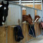 trois-chevaux-dans-leur-box-interieur-dontdeux-qui-se-font-des-bisous-ecuries-nicolas-mergnac-charente