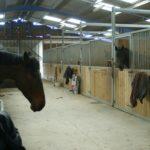 vue-interieur-ecuries-box-avec-deux-chevaux-qui-sortent-tete-ecuries-nicolas-mergnac-nercillac-charente
