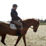 cavalier-qui-monte-sur-cheval-marron-ecuries-nicolas-mergnac-charente