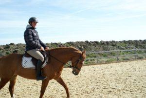 cavalier-sur-cheval-marron-qui-marche-dans-carriere-ecuries-nicolas-mergnac-charente