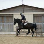 cavalier-sur-cheval-noir-au-galop-dans-carriere-ecuries-nicolas-mergnac-charente