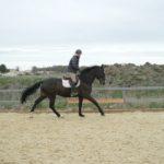cavalier-sur-cheval-noir-au-galop-ecuries-nicolas-mergnac-nercillac