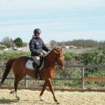 cavalier-sur-un-cheval-marron-ecuries-nicolas-mergnac-nercillac-charente.