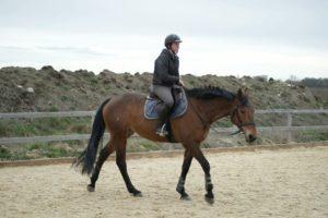 cavaliere-au-pas-avec-cheval-marron-fonce-dans-carriere-ecuries-nicolas-mergnac-nercillac