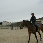 cavaliere-au-trot-sur-cheval-marron-dans-carriere-ecuries-nicolas-mergnac-charente.