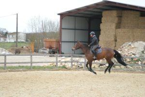 cavaliere-sur-cheval-marron-fonce-au-galop-ecuries-nicolas-mergnac.