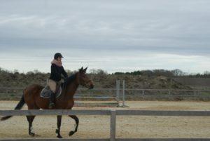 cheval-marron-monté-par-une-cavaliere-dans-la-clairiere-ecuries-nicolas-mergnac-nercillac.j