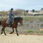 cheval-marron-monte-travail-ecuries-nicolas-mergnac-nercillac-charente