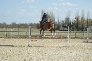 cheval-marron-qui-saute-les-4-pattes-en-meme-temps-un-obstcale-ecuries-nicolas-mergnac
