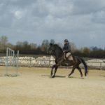 cheval-noir-au-galop-ecuries-nicolas-mergnac.j