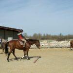 deux-chevaux-dans-carriere-ecuries-nicolas-mergnac-charente.