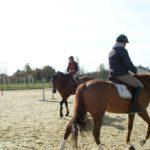 deux-chevaux-marrons-montes-par-cavaliers-dans-carriere-ecuries-nicolas-mergnac-nercillac-charente