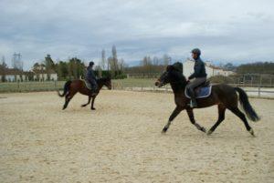 deux-chevaux-marrons-montes-par-leurs-cavalieres-ecuries-nicolas-mergnac