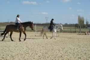 deux-chevaux-qui-marchent-dans-la-clairiere-avec-leur-cavalieres.