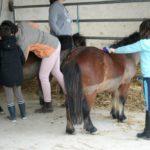 enfants-qui-préparent-leurs-poneys-pour-le-cours-ecuries-nicolas-mergnac-charente.j