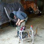 marechal-ferrand-qui-tient-le-sabot-du-cheval-entre-ses-cuisses-qui-met-un-clou-pour-tenir-fer-a-cheval