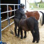 poneys-prest-pour-le-cours-ecuries-nicolas-mergnac-charent