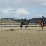 toirs-chevaux-montes-par-leurs-cavaliers-lors-d-un-cours-ecuries-nicolas-mergnac