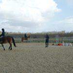 trois-chevaux-a-l-arret-dans-carriere-lors-un-cours-ecuries-nicolas-mergnac-charente.