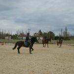 trois-chevaux-dans-carriere-montes-ecuries-nicolas-mergnac.