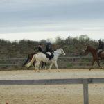 trois-chevaux-en-train-de-marcher-dans-la-clairiere-montes-par-des-cavaliers-ecuries-nicolas-mergnac-charente